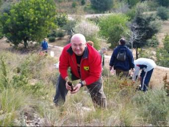 Joan Francesc Peris participa d'una campanya de reforestació. ARXIU