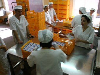 Treballadors a la planta de producció de iogurts.  EL PUNT