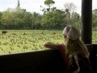 Hi ha zones al parc natural que encara són explotades de manera tradicional pels ramaders.  LLUÍS SERRAT