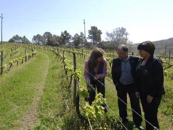 Raventós, Escura i Pla observen la vinya a la masia de Can Coll.  LOCALPRES