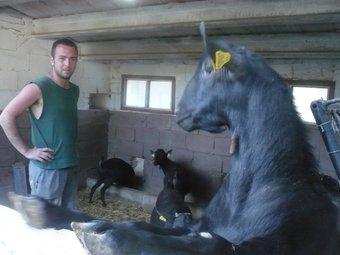 Ferran Altés ha fet portar les 250 cabres i els 9 macles d'una explotació de Múrcia E.F