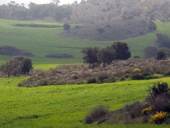 Camp de secà a la Segarra.  GABRIEL MASSANA