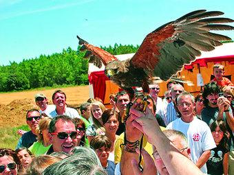 El programa de la V Festa dels Templers d'Aiguaviva inclou exhibicions d'aus rapinyaires.  AJUNTAMENT D'AIGUAVIVA