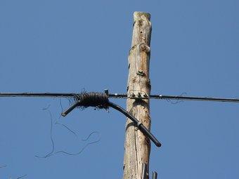 Part d'un cable de coure que van tallar els lladres d'un pal telefònic de la Pera. Ò.P