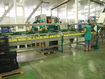 Tres treballadores de Costa Brava Fructicultors, ahir al matí.  I.BOSCH