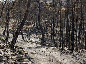 Zona afectada per l'incendi que crema des de diumenge a Eivissa. EFE
