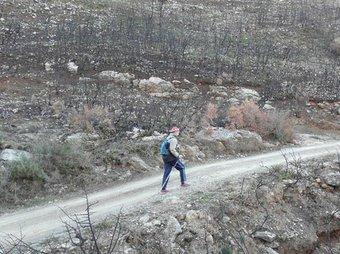 Zona arrasada pels incendis de l'Alcalatén en 2007. ARXIU