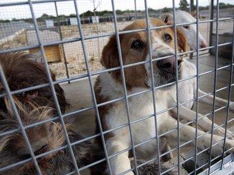 Exemplars de gossos que han estat acollits a la Protectora d'Animals Terres de l'Ebre, a Camarles. JOSÉ CARLOS LEÓN
