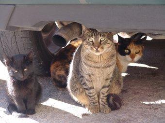Una colònia de gats a la zona del Portal Nou de Valls, on la presència de felins va desencadenar nombroses queixes fa un any. A. ESTALLO