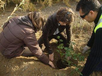 Voluntaris plantant un arbre ahir a la riera de la Boella. EL PUNT