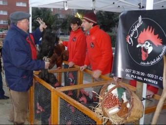 Un comprador escollint dues peces de gall autòcton del Penedès a la fira de l'any passat A.M