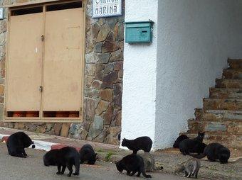 Colònia de Gats al carrer Marina de Santa Cristina d'Aro. Irene Rigall