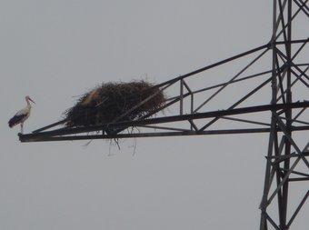 Una cigonya i el seu niu en una de les torres elèctriques abandonades de la fallida línia Penyalba-Graus-Cazarilh, a la comarca de la Llitera. D.M
