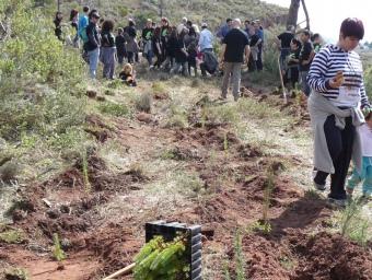 Alguns dels voluntaris, ahir al migdia, plantant arbres al bosc de les basses de Cal Llogari. C.A.F