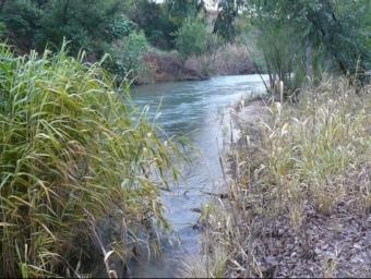Canyars de la vora del riu Túria al seu pas per Pedralba. L. SOLLER