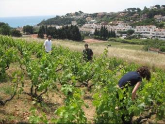 La vinya d'en Pata seu de la cooperativa del Rial d'Arenys de Mar. N. RAMON