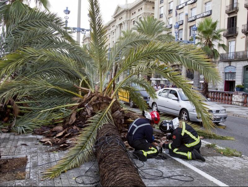Dos Bombers retiren una palmera caiguda al Passeig Colom de Barcelona a causa del xàfec d'aquesta tarda TONI GARRIGA / EFE