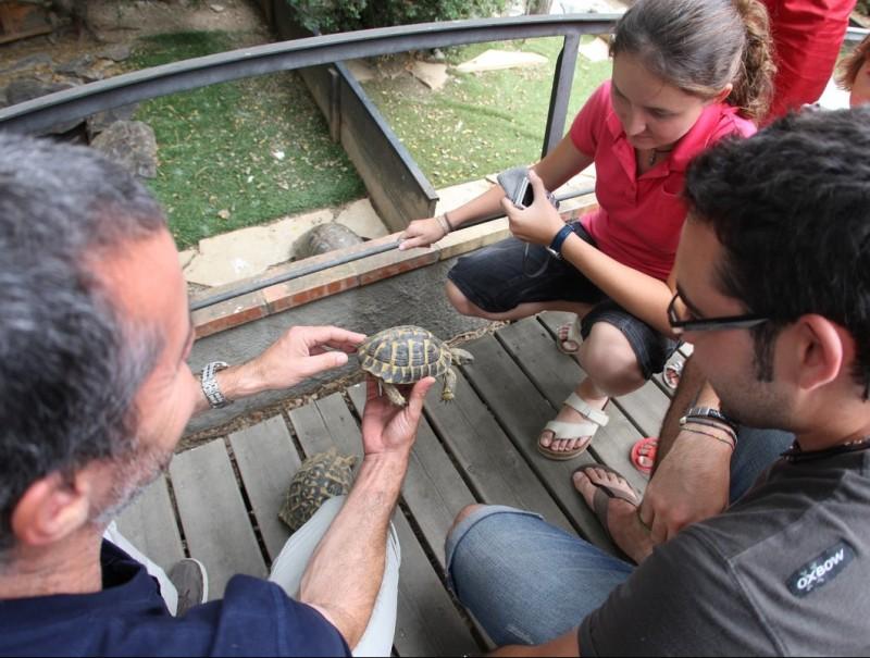 Xavi Capalllera, un dels responsables del centre, mostra algunes tortugues a un grup de visitants al centre de reproducció de l'Albera. LLUÍS SERRAT