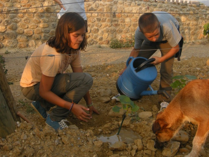 Uns nens plantant un cep.