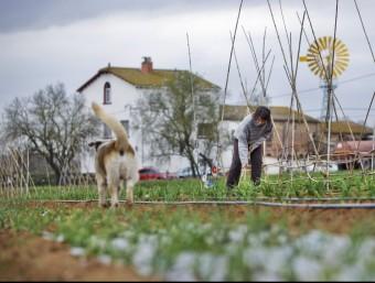 Finca d'agricultura ecològica al parc natural de Gallecs, a Mollet del Vallès  ARXIU /ROBERT RAMOS