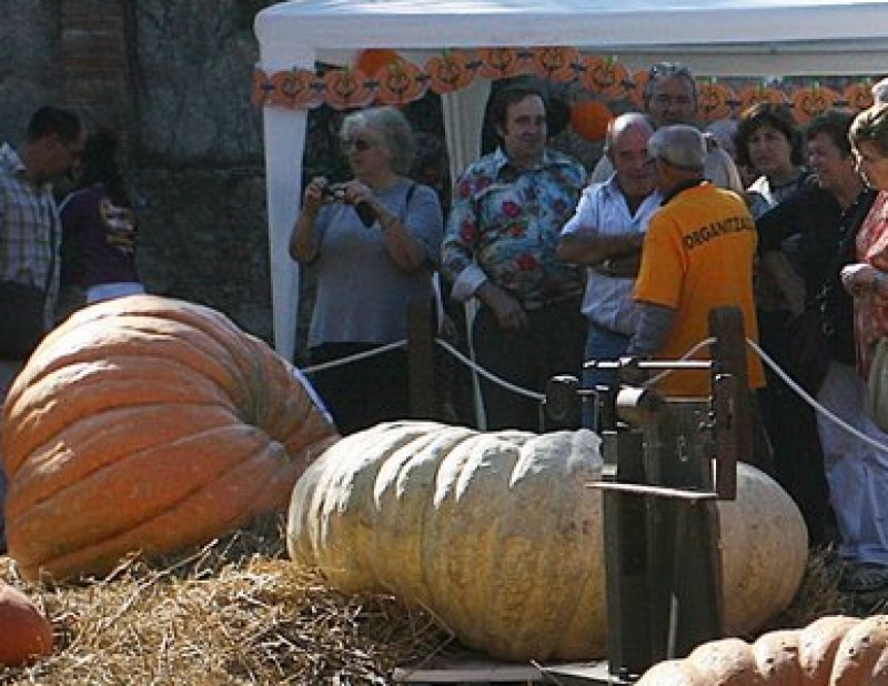 Algunes de les carbasses gegants que van participar al concurs de carbasses grosses de la Fira de la Carbassa d'Esponellà MANEL LLADÓ