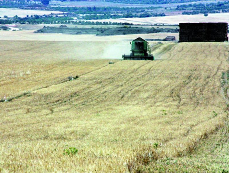 La reforma de la PAC beneficia activitats agrícoles extensives.  ARXIU