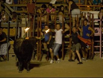 Un bou embolat a les festes majors d'Amposta l'agost de l'any passat. Enguany l'Ajuntament reduirà els actes taurins. JOSÉ CARLOS LEÓN