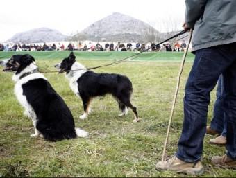 El tradicional concurs es fa diumenge al camp d'en Coll.  SORTIM