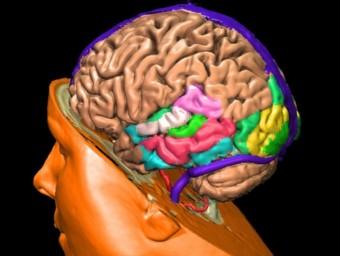 """""""El nostre cervell connecta, raona, visualitza, absorbeix, transforma, avalua i flueix"""", escriu Shelley Carson.  ARXIU"""
