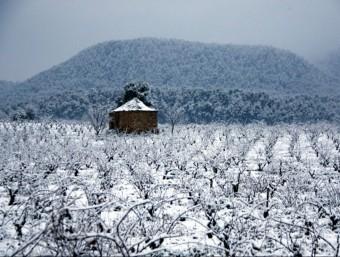 Una paisatge enfarinat per la neu al Bages ESTEFANIA ESCOLÀ / ACN