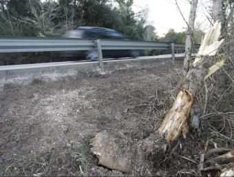L'arbre contra el que va impactar el cotxe del matrimoni d'Olot. LLUÍS SERRAT