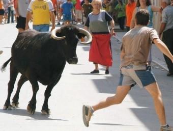 Correbous, a la plaça, durant la festa major d'Ulldecona EL PUNT