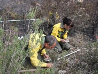 Dos agents rurals rastregen la zona de la Font del Teix. ACN