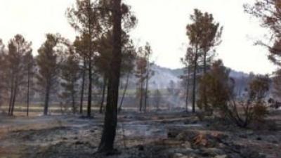 Terres calcinades després de l'incendi patit a la contrada de Bercuta. L. SULLER