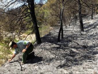 Un agent forestal pren mostres aquest dimecres per a investigar les causes de l'incendi que ha afectat l'Alt Penedès i el Garraf EFE