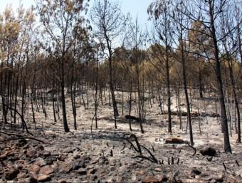 Part de la serra del Motrotón al terme municipal de Iàtova, afectada per les flames de l'incendi de Cortes de Pallars ACN
