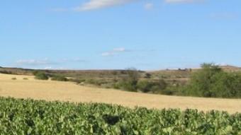 La Ribera compte amb 21.000 hectàrees de vinyes.  M,.J.R.