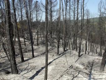 L'incendi forestal, que es va declarar dijous la tarda a Sant Feliu Sasserra, ja ha cremat 360 hectàrees de vegetació forestal i conreu ACN