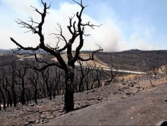 Una imatge del bosc calcinat, després de l'incendi del juliol de l'any passat. JOAN SABATER