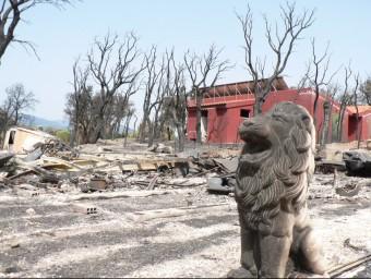 El gris domina el paisatge cremat. Un lleó guarda les ruïnes del càmping de Capmany PAU LANAO