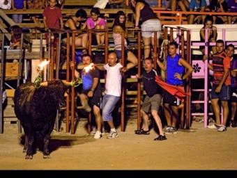 El bou embolat és un dels espectacles taurins més qüestionats per les protectores d'animals i un dels que atrau més aficionats a les Terres de l'Ebre. JOSÉ CARLOS LEÓN