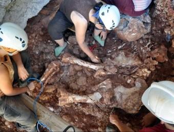 Els arqueòlegs excavant les extremitats posteriors de l'elefant BERTRAN RCAZORLA (ACN)