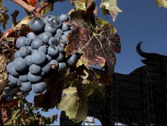 Imatge d'una vinya de la zona Requena - Utiel. ARXIU