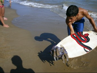 Un exemplar de medusa capturada per un jove a Castelldefels GABRIEL MASSANA / ARXIU