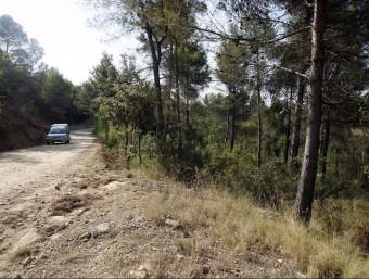 La sequedat dels boscos catalans i el perill d'incendi és un dels problemes generats per la falta de pluja ORIOL DURAN