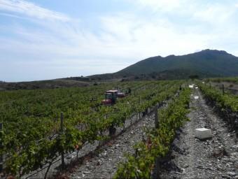 Les vinyes del celler Martín Faixó