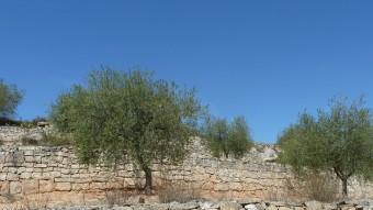 Pere Gil va escriure el 1600 que Catalunya no tenia necessitat d'oli d'altres províncies  ARXIU