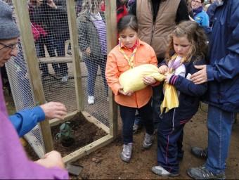 Dues nenes abans de posar la terra en l'espai on s'hi ha plantat el roure clonat que substitueix l'arbre monumental que va caure fa dos anys. T.M