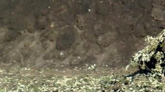 Les tres capes de la carbonera: la de llenya, la de bruc i la de fagell.
