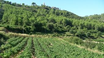 Les vinyes envolten el castell de Subirats. TURISME SUBIRATS
